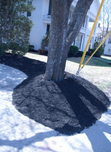 Volcano mulching is too much of a good thing.